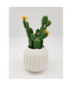 Cactus fleuri dans son contenant Scandinave  H 16 cm  Blanc