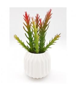 Cactus dans son contenant Scandinave  H 17 cm  Blanc