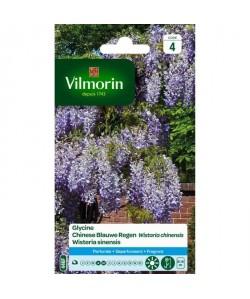 VILMORIN Sachet graines de Glycine WISTARIA CHINENSIS