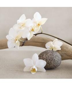 Affiche papier   White orchid    Chatelain    30x30 cm