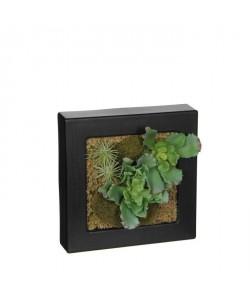 MICA DECORATIONS Cadre Végétal Déco Plante Artificielle Crassulacae  L20 x b20 x h5cm